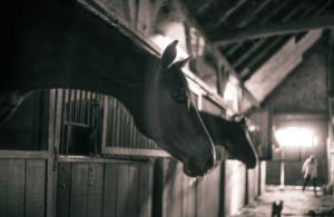 pferdeanhänger