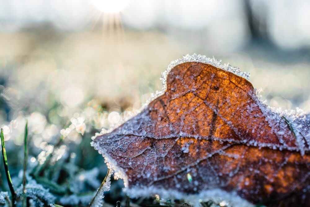 Der erste Frost